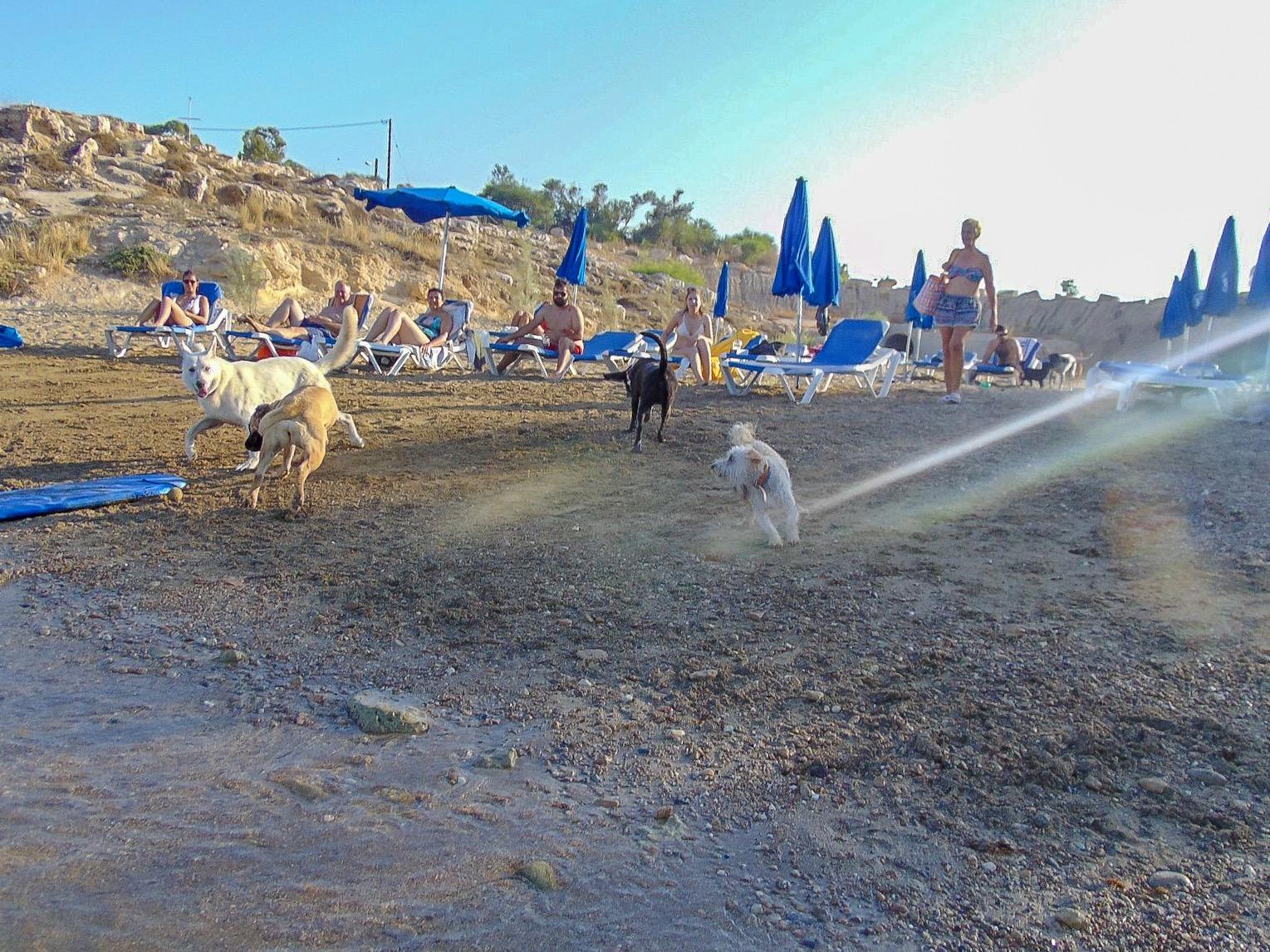 Официальный Собачий пляж Каппариса
